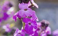 1600 webb blomma