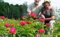 Kenneth och Anette Mallalieu har nu Sveriges största privata rosenträdgård.