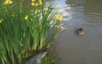 Vackert i den lilla dammen