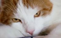 Grå katt i mörker fäller stor männniska