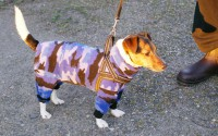Mode för en hund