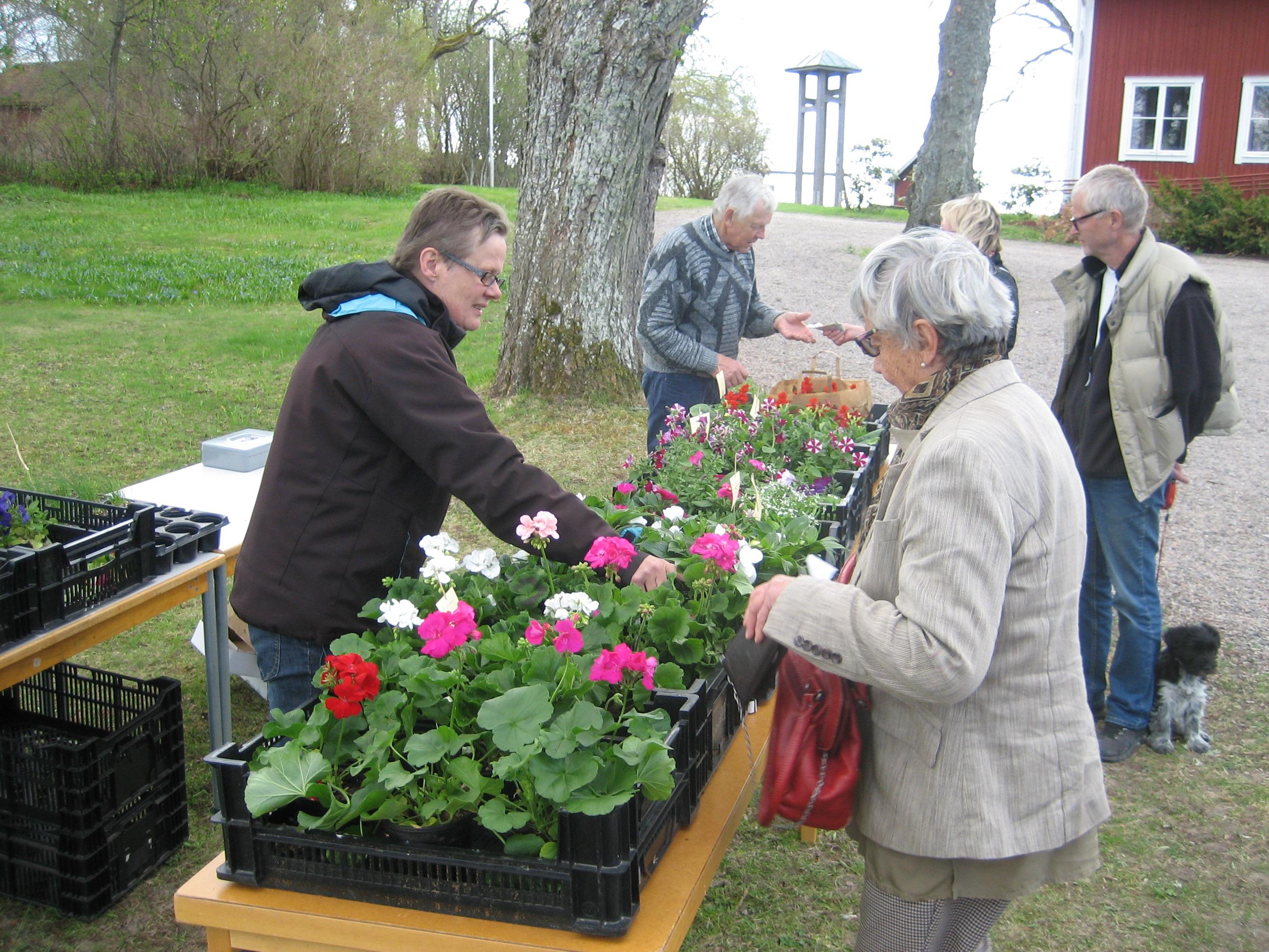 Mitt Sörmland - Pia Hellström och Kurt Nordkvist säljer blommor