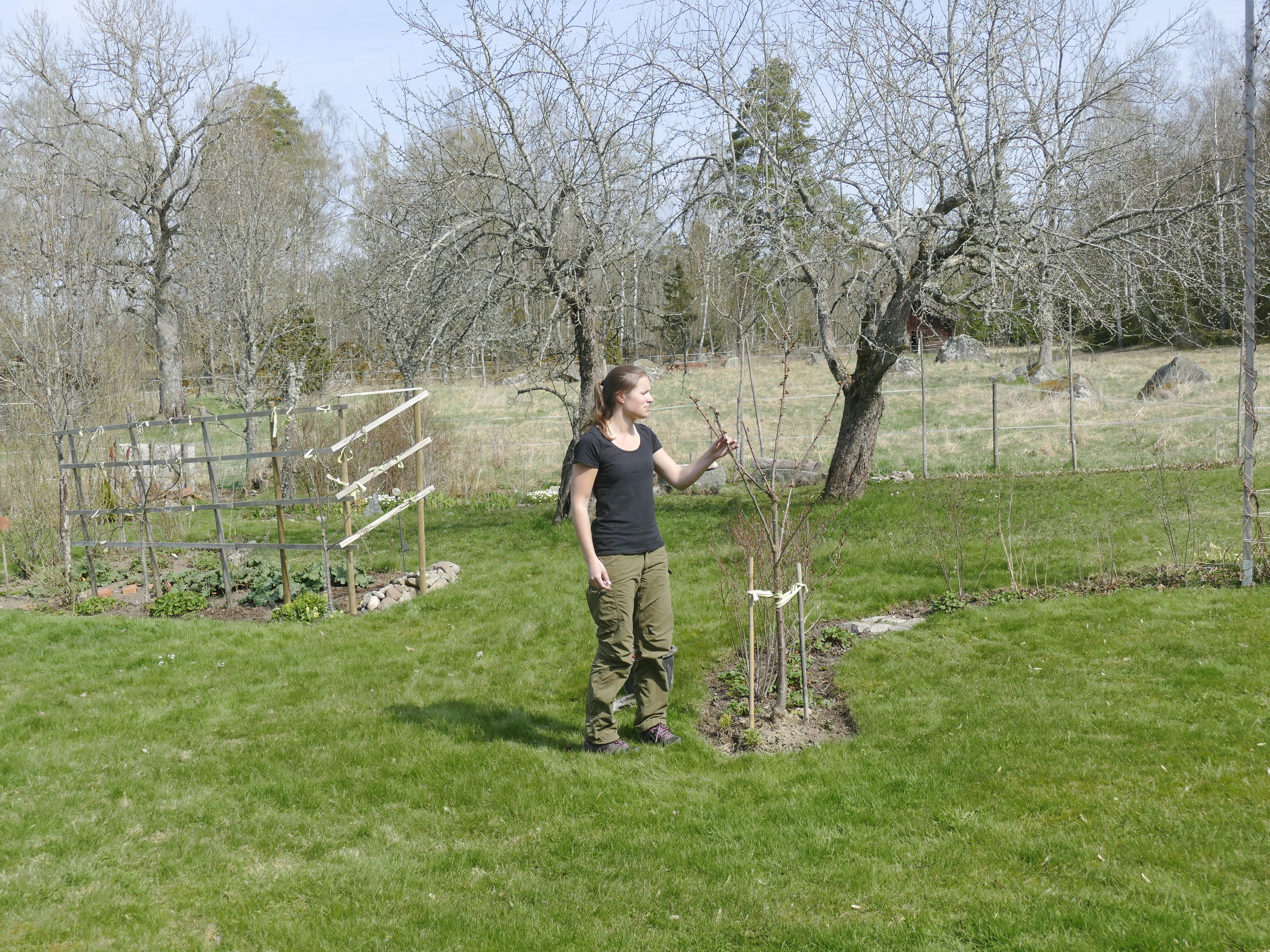 Västmanlands nyheter » trädgårdsdesignern som älskar att rita ...