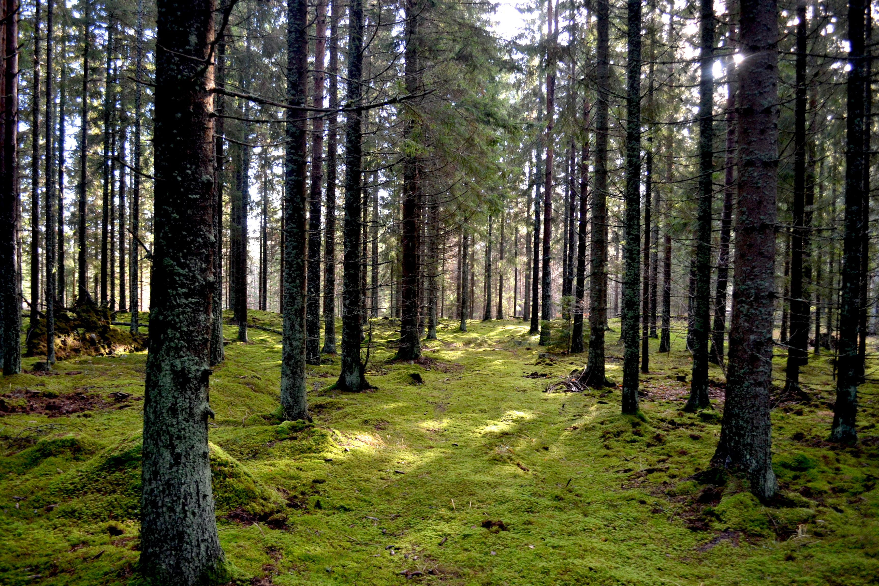 0fdd40b8 Jord & SkogPriset på skogsmark på väg neråt i Mellansverige
